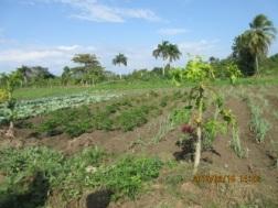 haiti_blog_4